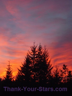 Evergreens and Fiery Sunset