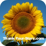 Thumbnail of bright yellow sunflower against dark blue sky