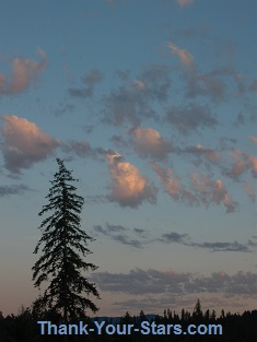 Lone Tree Silhouette and Bubbly Clouds after Sunset