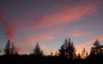 Last light of sunset with red cloud strands over 4 clumps of evergreen trees