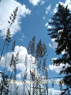 Tall Grass Skyscape